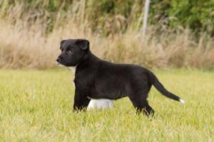 Ultimate Pups 6 weken-10web9