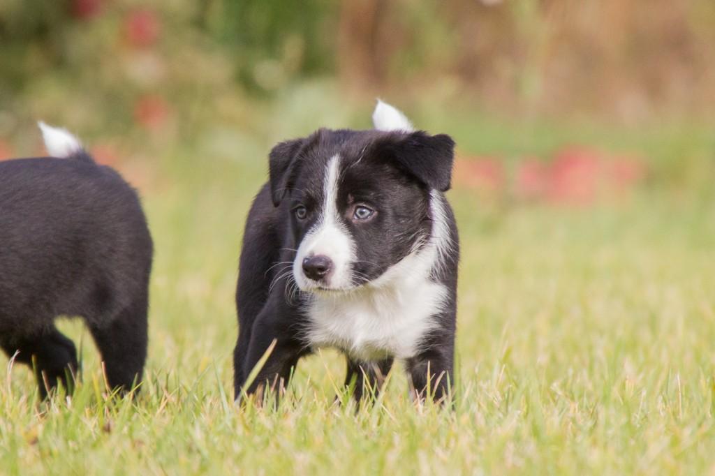 ultimate-pups-6-weken-26