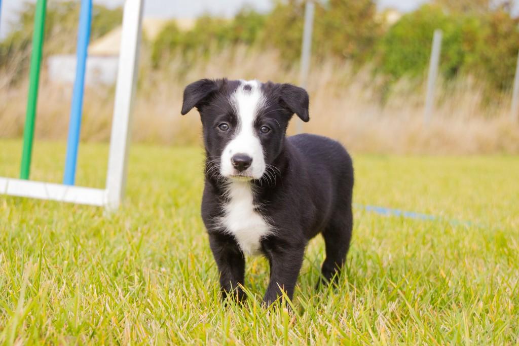 ultimate-pups-6-weken-33